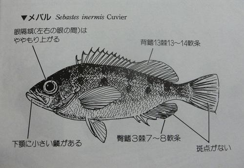 CIMG1025.JPG