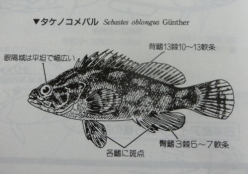 CIMG1026.JPG